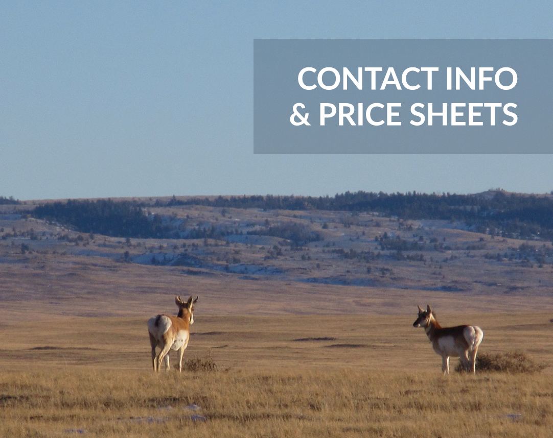 Contact Info and Price sheets with pronghorn in field